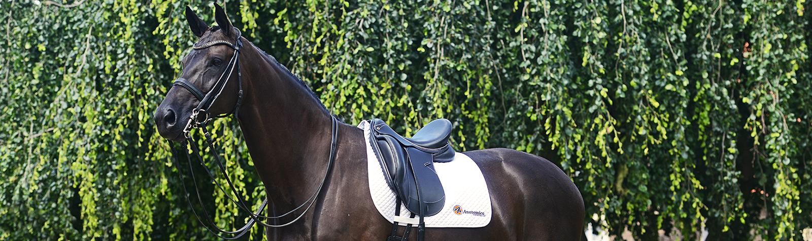 (Nederlands) Anatomica S-Line dressuurzadel genomineerd voor de Horses Product van het Jaar 2017 verkiezing!